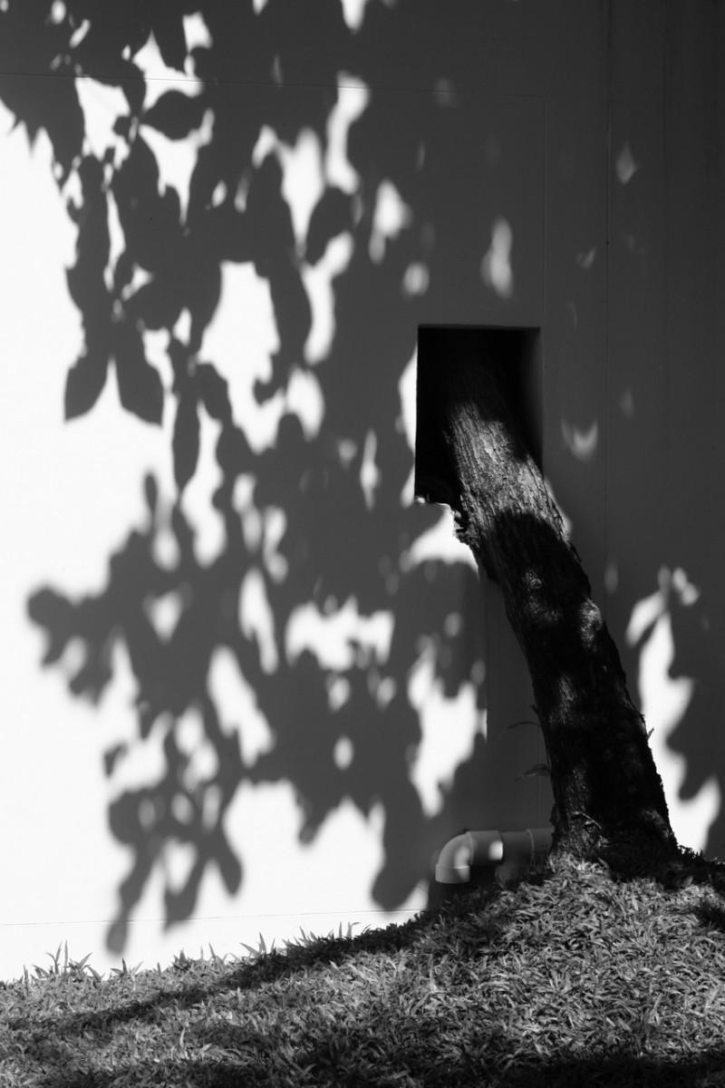 Shadow Penetration (c) Michael Dürr